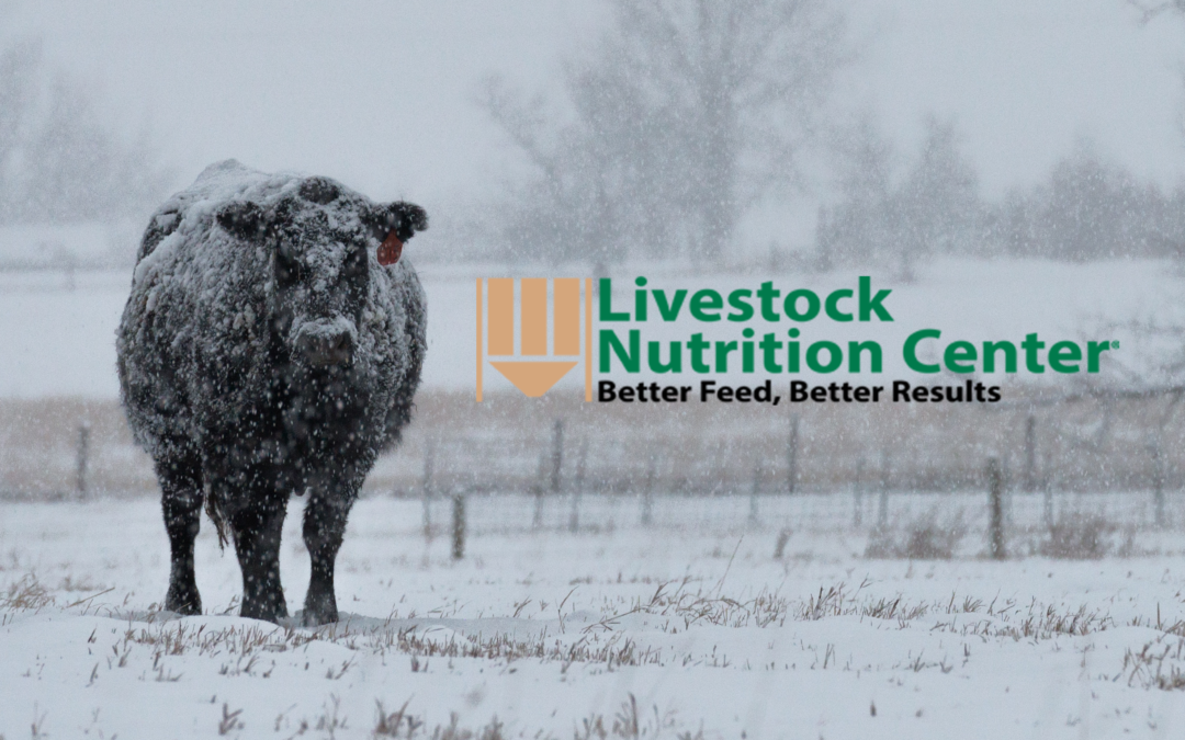 Weather Effects on Cow Requirements